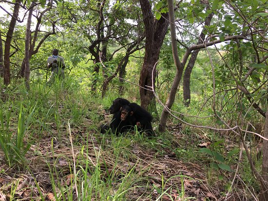 Gombe Stream National Park: Dr Jane Goodall Researchers
