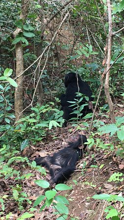 Gombe Stream National Park: chimps life