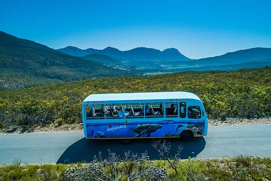 City Sightseeing South Africa: getlstd_property_photo