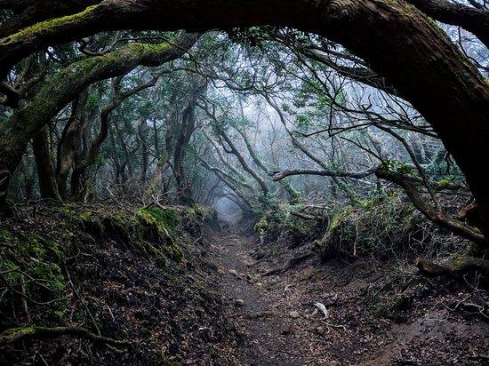Mt. Amagi
