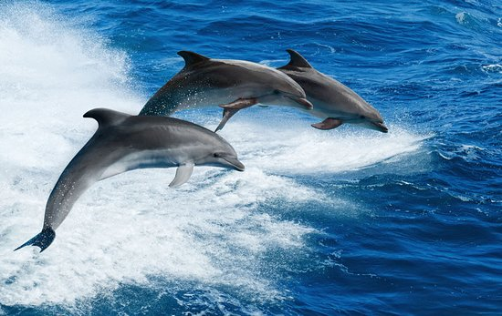 Interested in dolphins n diving at the Kisite ins let n a delicious sea food lunch or favourite kindly look no more contact +254733444429