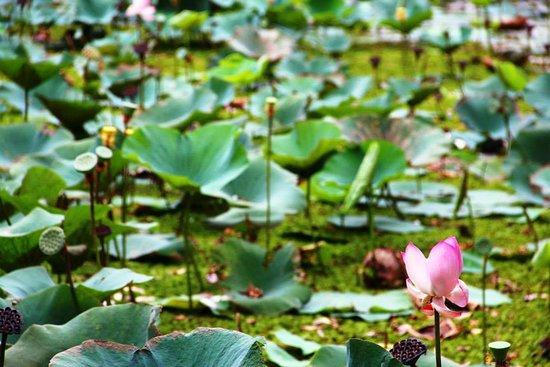 Sigiriya Lake