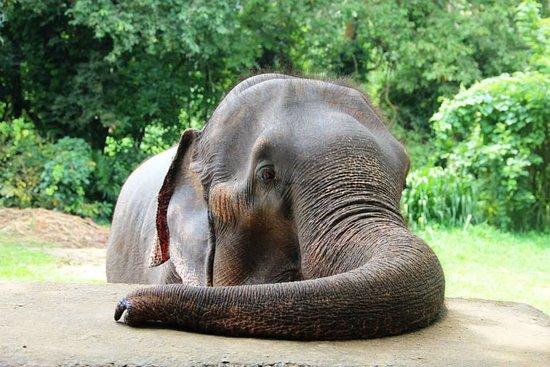 Sigiriya Elephant Rides