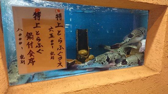 Kappo Yama: 上等なフグがぷくぷくと泳いでいます。