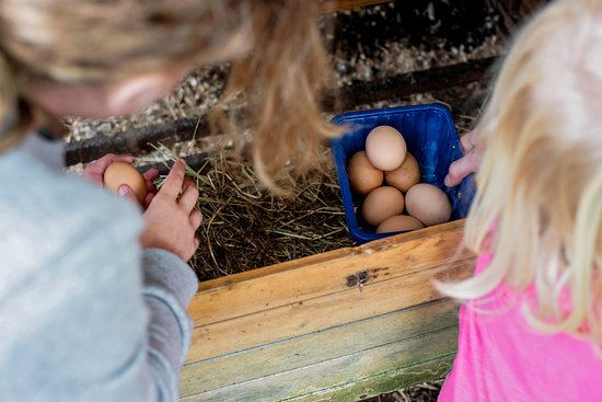 Morar Bed and Breakfast : Collecting eggs for breakfast!