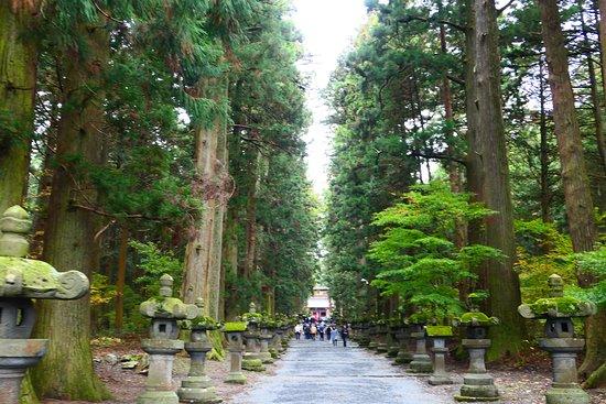 Kitaguchi Hongu Fuji Sengen Jinja Shrine: 私が一番お気に入りなのは入口の大鳥居から始まるこの参道です。荘厳な雰囲気です。