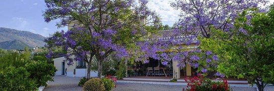 Riogordo, Spain: Hier het terras met in dhet najaar de Jacaranda boom met geweldige bloemen