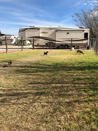 Dog run/park