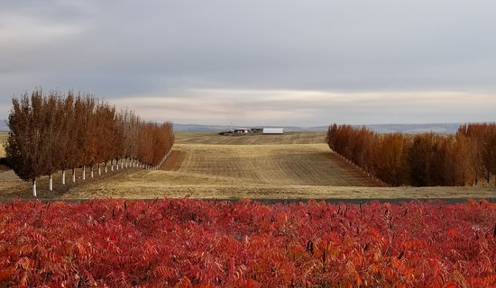 Walla Walla, WA: Looking from the deck towards the highway