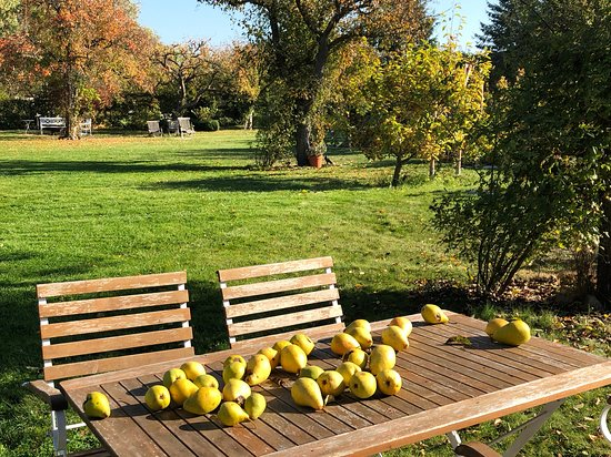 Wiek, Jerman: How about a pear fresh from the tree? Late summer is  perfect saison to enjoy all the benefits of nature - and the baltic is still perfect for a swim or a session of kite-surfing.....