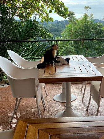 Cute monkey joining us for Breakfast