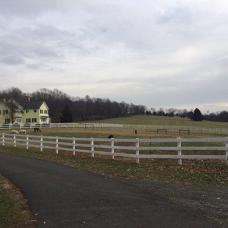 Peapack-Gladstone, Нью-Джерси: Bluebird Farm Alpacas