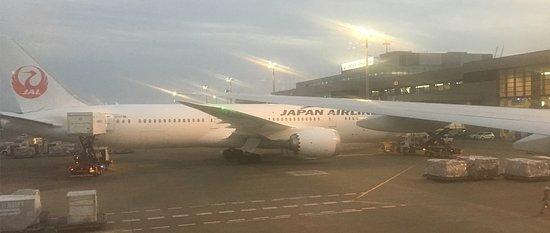 Japan Airlines: viendo la flota de JAL