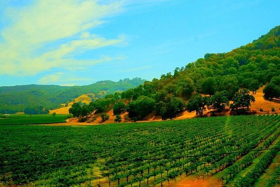 Napa and Sonoma Valley Wine Country...