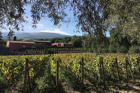 Mt Etna Wineries Tour from Taormina