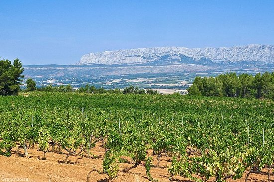 Halvdagers vintur i Côtes de Provence...