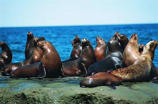 Utflukt til Punta Loma, en Sea Lion...