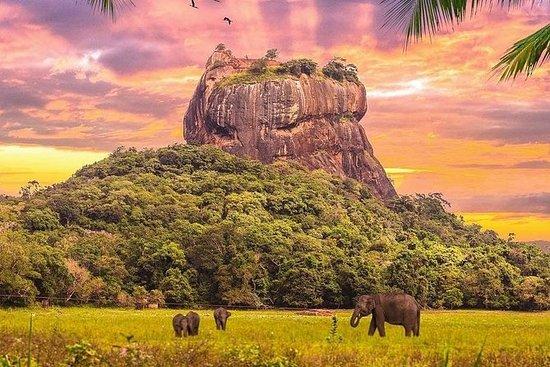 Kandy til Sigiriya Day Tour