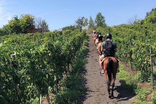 Expérience d'équitation sur le Vésuve...