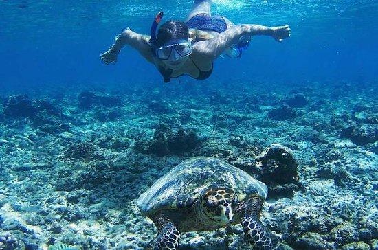Lombok Gili Islands Snorkeltur med...