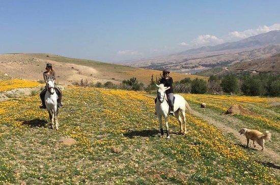 Paseo a caballo de marrakech