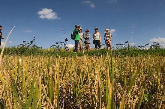 Explore Ubud with Electric Bike