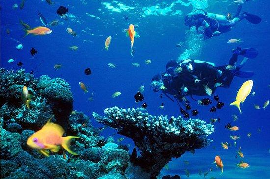 Cebu Diving Experience