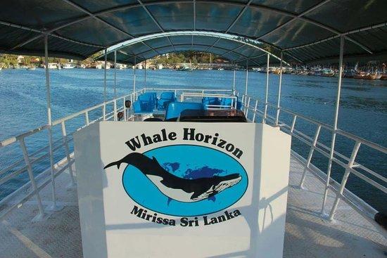 Whale Watching Mirissa - Whale Horizon