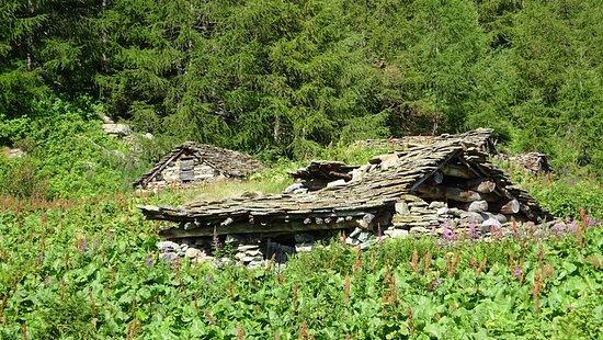 Via dei Cervi sopra Chiareggio (Val Malenco) Quando il bosco avanza implacabile ...
