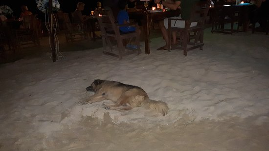 Dogs comfortably enjoying the warm sand