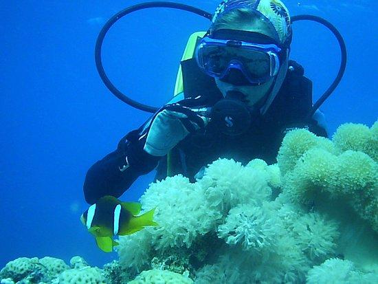 "Diving Club ""Nautilus-aqaba"": куда  же без капитана Немо))"