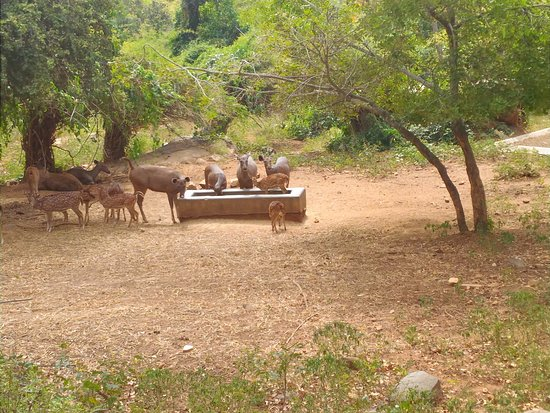 Bannerghatta National Park Private Day Tour with Butterfly Park and Safari from Bangalore: Safari, Bannerghatta National Park, near Bangalore, Karnataka