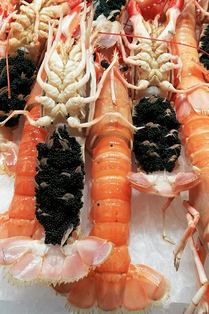 The freshest shell fish, here scampi or escarlons
