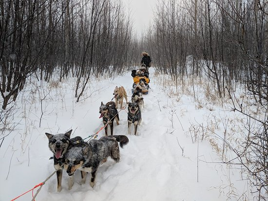 Nenana, AK: The Lee family with dog team. Taking a short rest after breaking trail in 20+in of snow. 11/13/2
