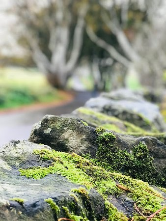 Old moss covered stone walls, with the Dark Hedges in the background