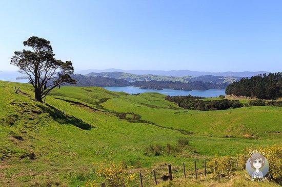 Новая Зеландия: Typische Landschaft auf der Nordinsel von Neuseeland. Ein tolles Reiseziel am anderen Ende der Welt. Wir sind 6 Wochen im neuseeländischen Frühling (Oktober/November) gereist. Unsere Reiseroute, Reisetipps und -informationen gibts bei uns auf dem Blog.