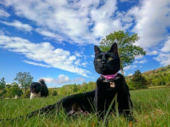 看板猫の福助、看板犬のチョコ