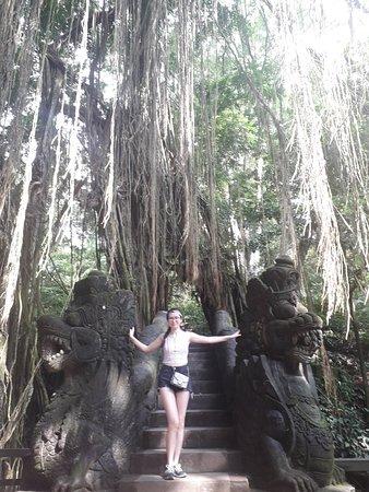 Sacred monkey forest sanctuary Ubud