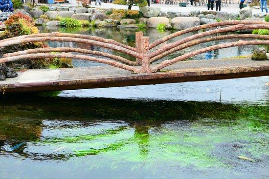 富士山の雪解け水が地下の溶岩の間で、約20年の歳月をかけてろ過され、湧水となっているからキレイですよね。
