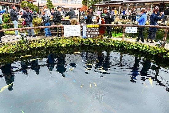 深さ8mの透き通った池なんですが鯉が中にいました。こんなきれいな水に入れて平気なんですかね。汚れてしまわないか心配です。あとこの池にコインの金銭をこの中に入れちゃだめですよー