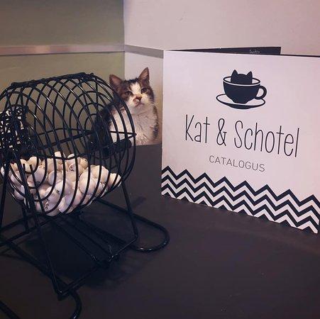 Kat & Schotel
