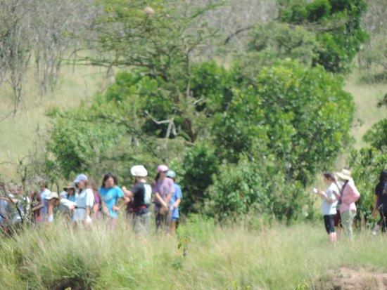 YHA Kenya Travel Tours And Safaris,Kenya Budget Adventure Safaris, Small Group Adventure Safaris.