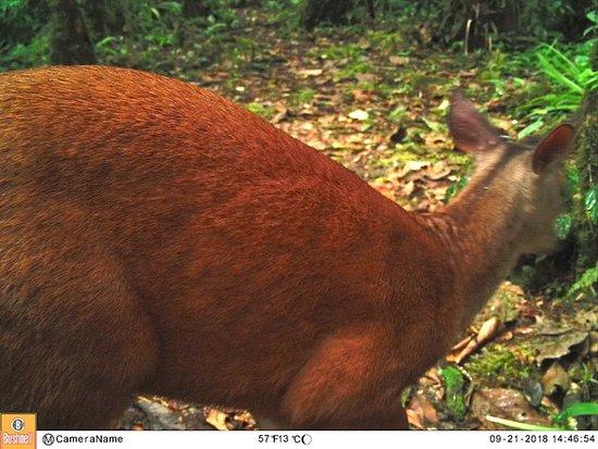 Deer caught of wildlife camera in the reserve.