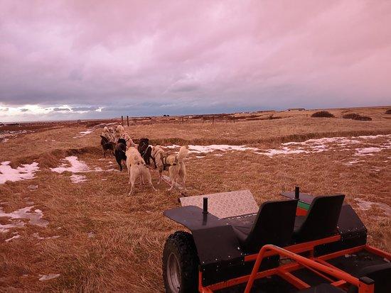 Valokuva: Dogsledding Iceland