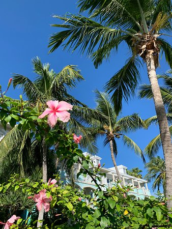 Sandals Emerald Bay Golf, Tennis and Spa Resort: gorgeous plants and trees