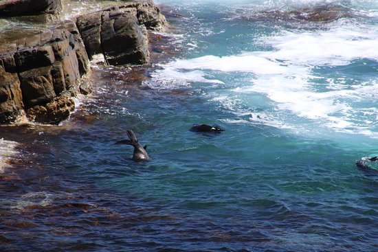 Kangaroo Island Luxury Small Group 'Flinders Chase Focus' Full Day Tour: So attractive!