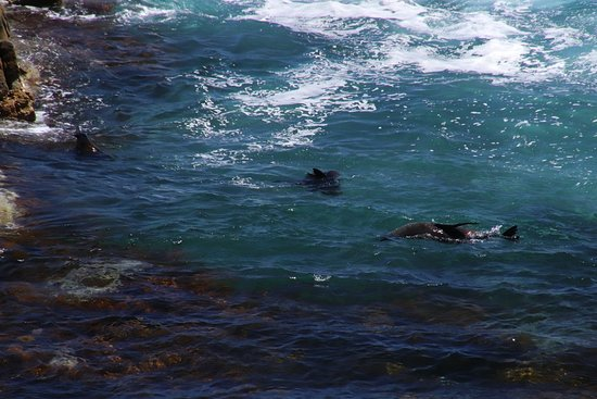 Kangaroo Island Luxury Small Group 'Flinders Chase Focus' Full Day Tour: Chasing one another