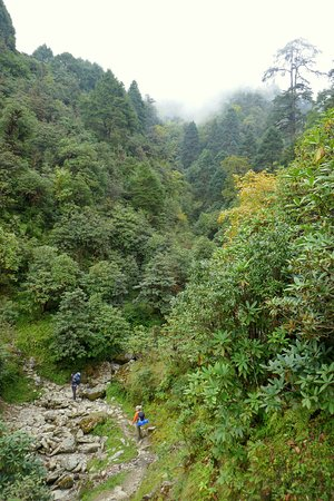 Mountain Delights Treks & Expedition: Feeling small in the jungle