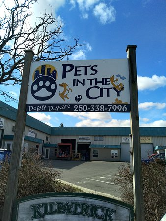 Courtenay, Canada: pets in the city