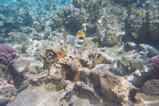 SON JARDIN de corail en activité